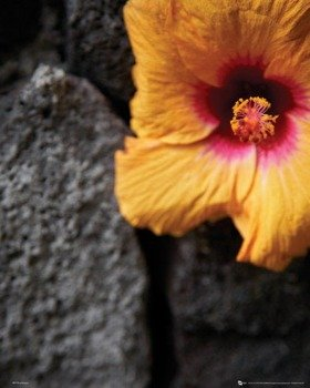 plakat FLOWERS - STONE WALL